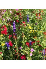 Garden Sprinkles - Hummingbird