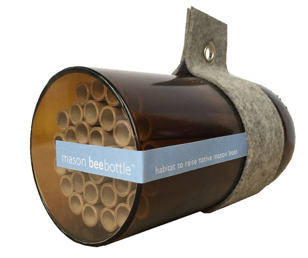 Bee Bottle - Mason Bee