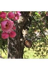 Bee Bottle - Native Bee