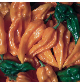 Seed Saver's Exchange Peppers, Fatalii