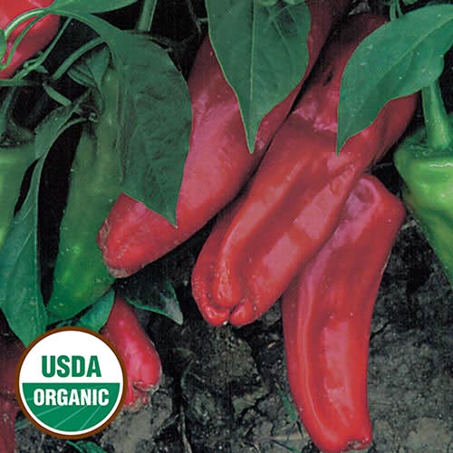 Seed Saver's Exchange Pepper - Marconi Red