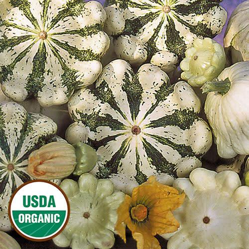 Seed Saver's Exchange Squash, Pattison Panache - Jaune Et Verte