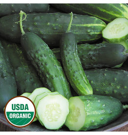 Seed Saver's Exchange Cucumber, Early Fortune