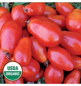 Seed Saver's Exchange Tomato, Martino's Roma