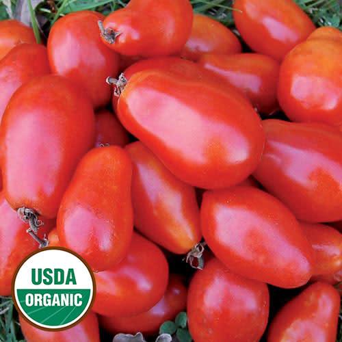 Seed Saver's Exchange Tomato - Martino's Roma