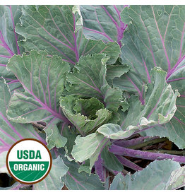 Seed Saver's Exchange Collard, Ole Timey Blue