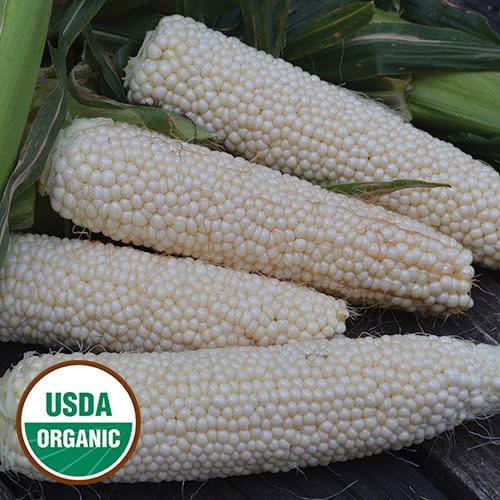 Seed Saver's Exchange Corn, Country Gentleman