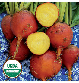 Seed Saver's Exchange Beet - Burpee's Golden