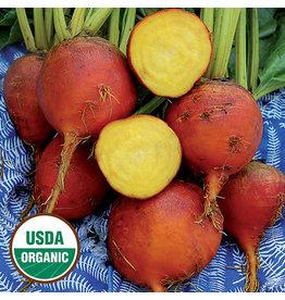 Seed Saver's Exchange Beet, Burpee's Golden