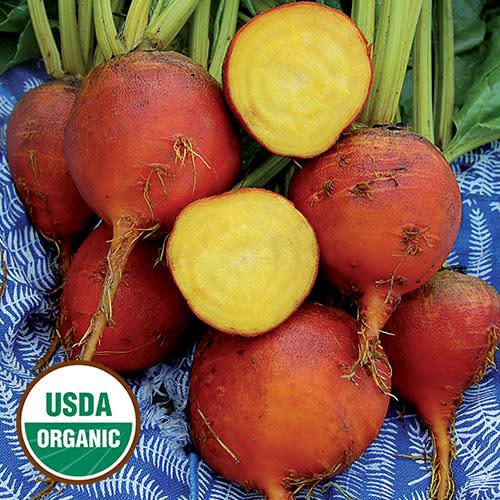 Seed Saver's Exchange Beet - Burpee's Golden