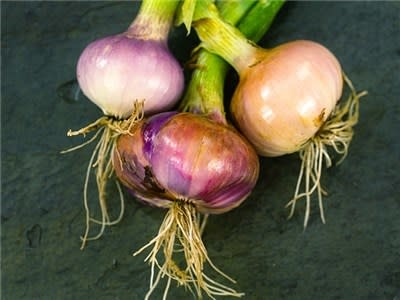 Baker Creek Seeds Onion, Violet De Galmi