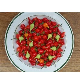 Baker Creek Seeds Pepper, Biquinho Hot