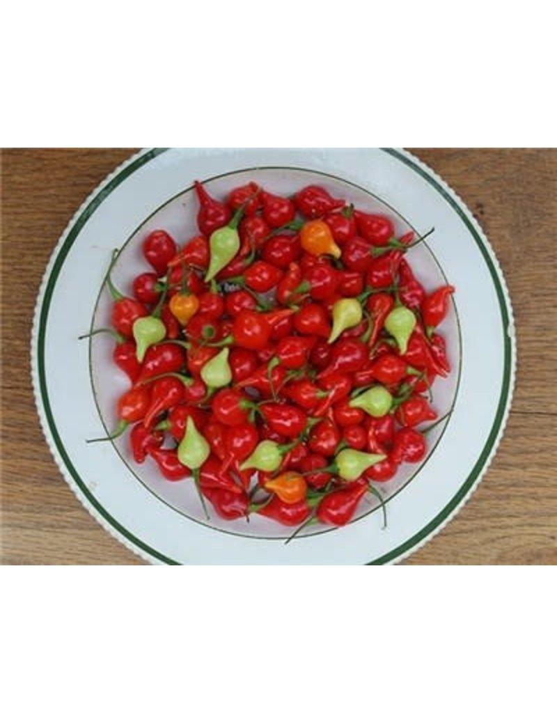 Baker Creek Seeds Pepper, Biquinho Hot
