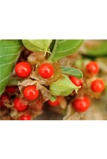 Baker Creek Seeds Garden Berry, Ashwagandha