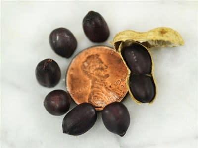 Baker Creek Seeds Peanut, Negrito Manduvi