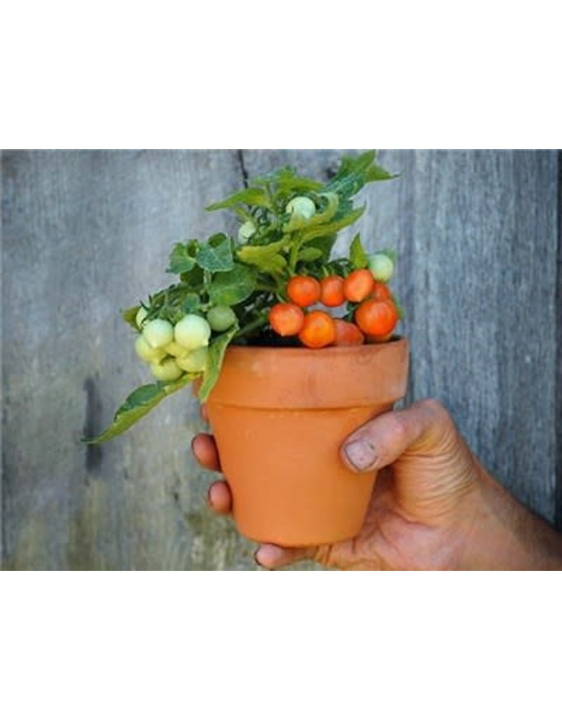 Baker Creek Seeds Tomato, Micro Tom