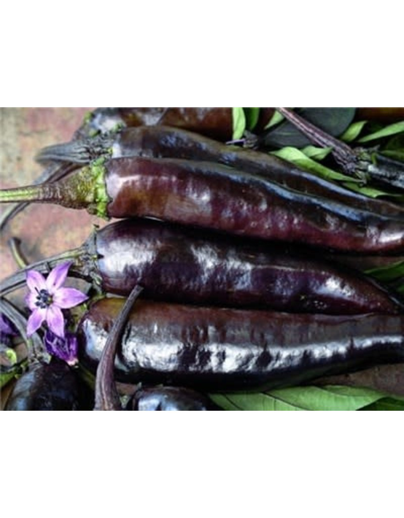 Baker Creek Seeds Pepper, Murasaki Purple