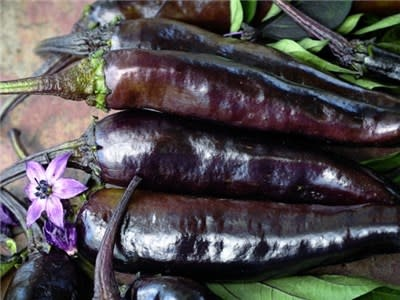 Baker Creek Seeds Pepper - Murasaki Purple