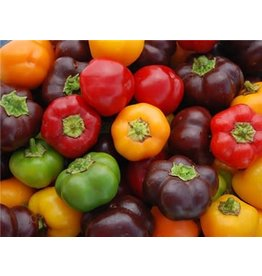 Baker Creek Seeds Pepper, Mini Bell