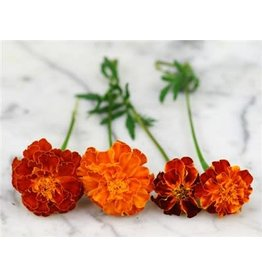 Baker Creek Seeds Marigold, Brocade Mix