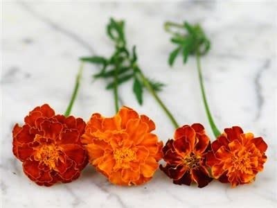 Baker Creek Seeds Marigold - Brocade Mix