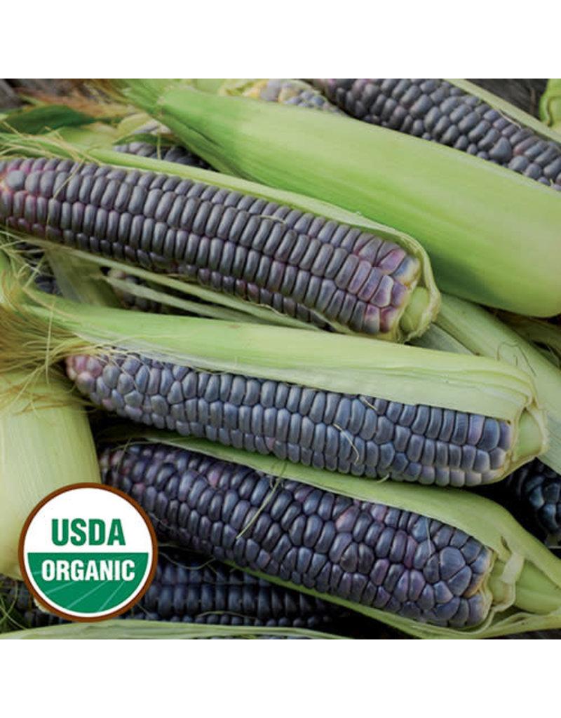 Seed Saver's Exchange Corn, Blue Jade
