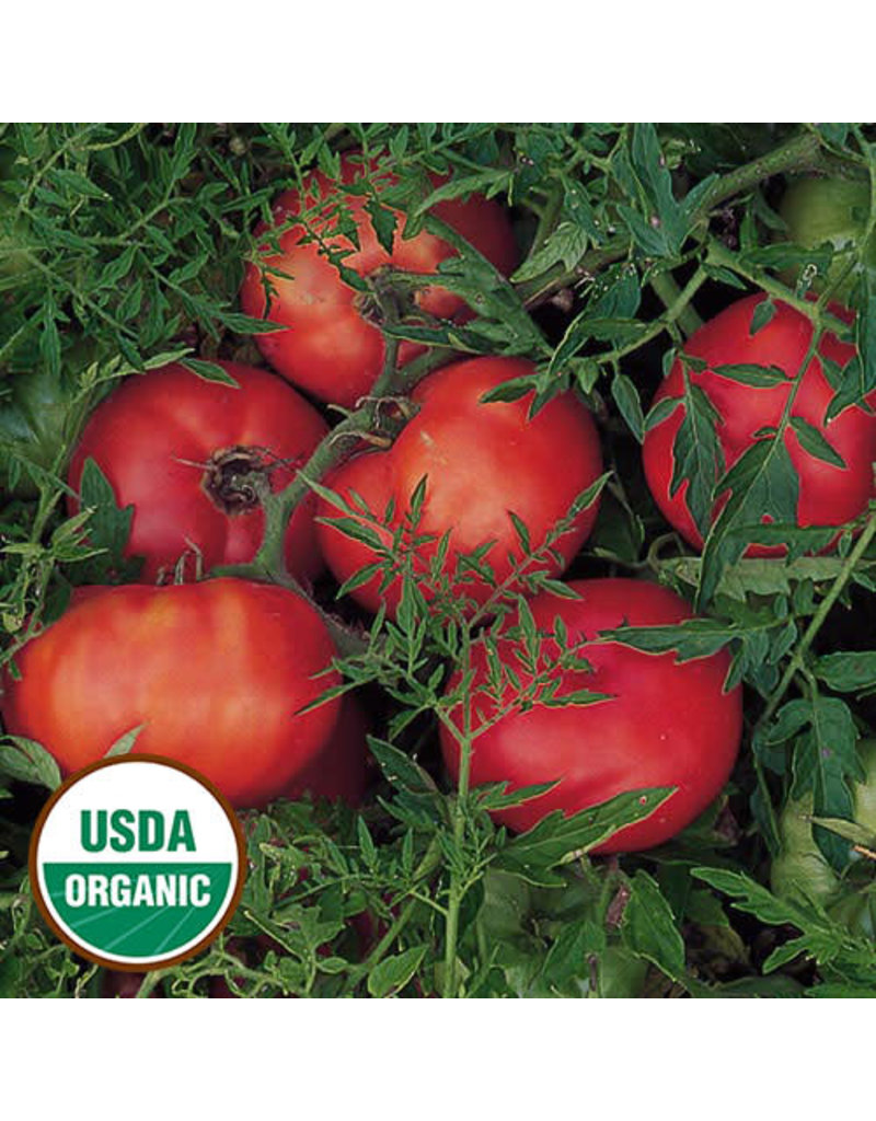 Seed Saver's Exchange Tomato, Silvery Fir Tree