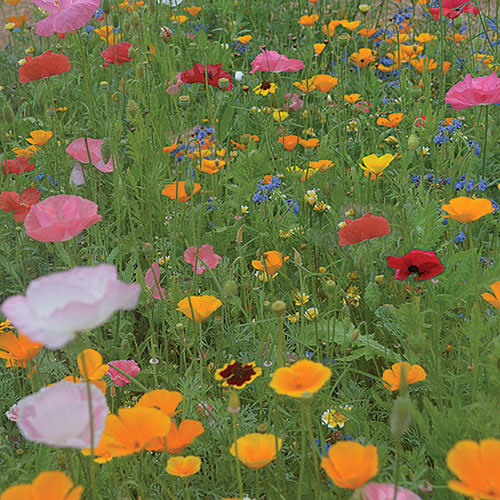 Flower - Bee Feed Mix