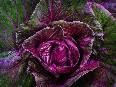 Baker Creek Seeds Cabbage - Kalibos