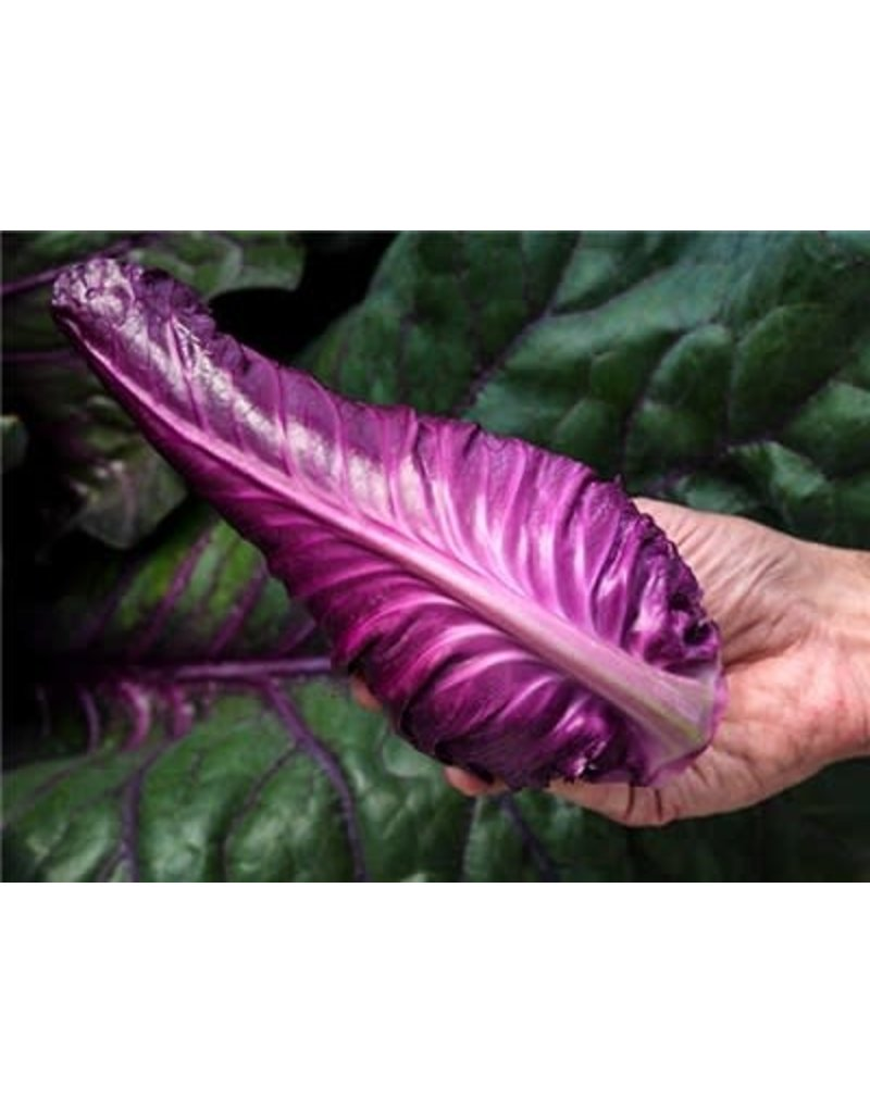Baker Creek Seeds Cabbage, Kalibos