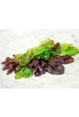 Baker Creek Seeds Lettuce, Rocky Top Mix Salad Blend