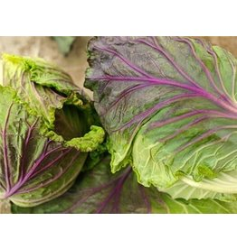Baker Creek Seeds Cabbage - Violaceo di Verona