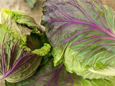 Baker Creek Seeds Cabbage - Violaceo di Verona