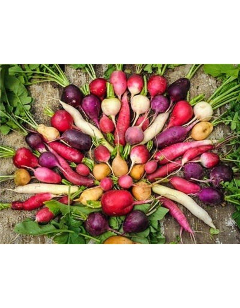 Baker Creek Seeds Radish, Easter Basket Mix
