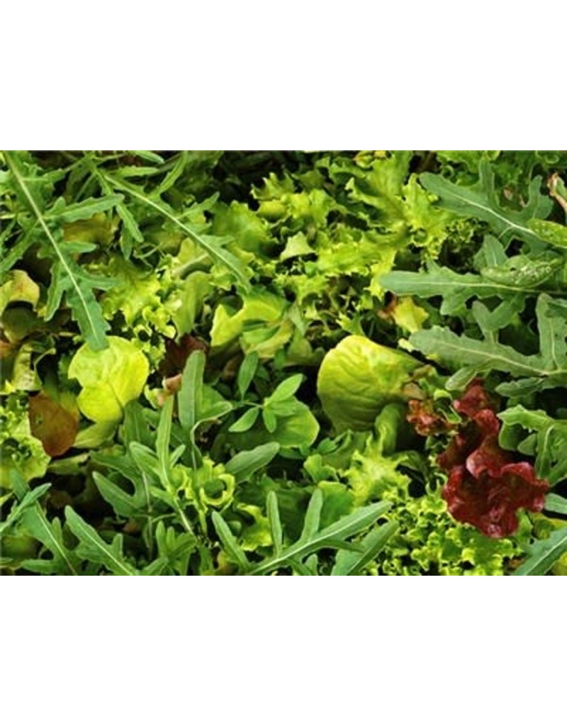 Baker Creek Seeds Salad Blend, European Mesclun Mix