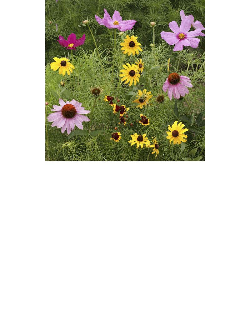Scatter Garden-Butterfly
