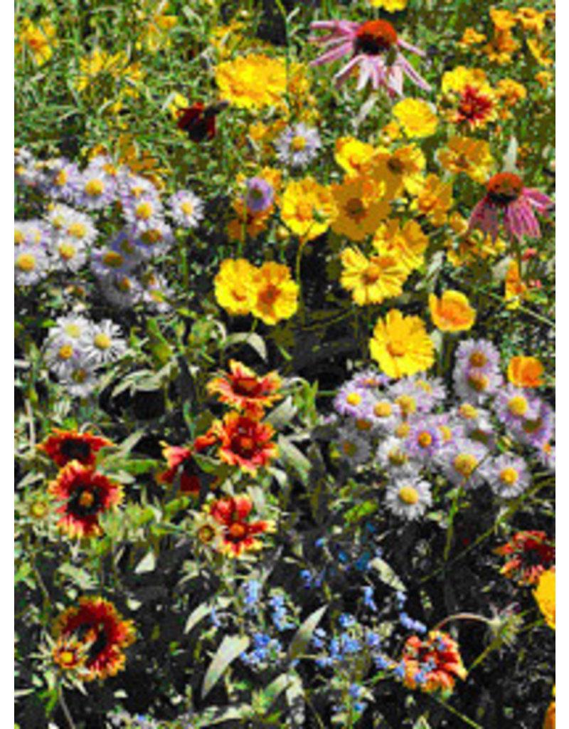 Scatter Garden - Honeybee