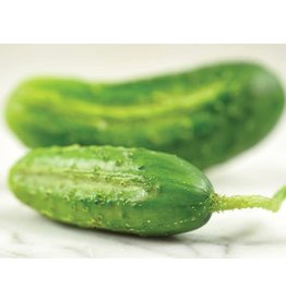Baker Creek Seeds Cucumber, Chicago Pickling