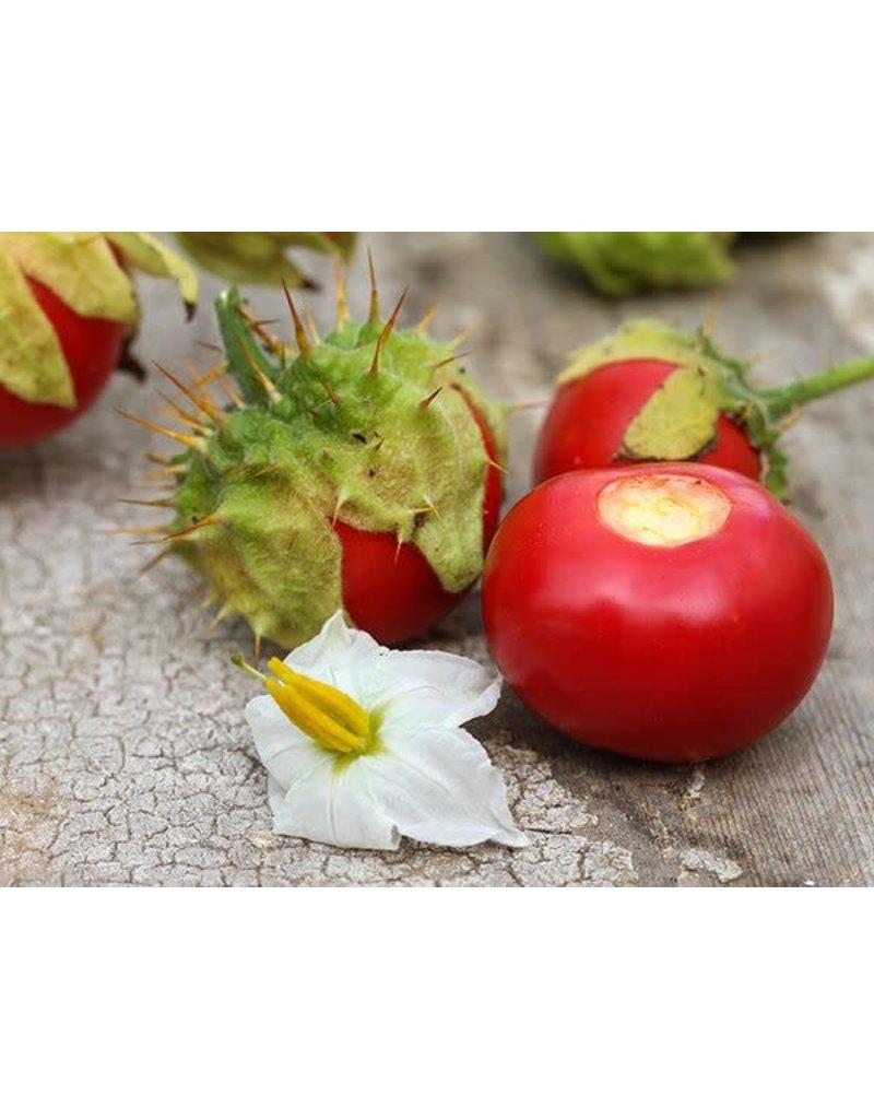 Baker Creek Seeds Garden Berry, Litchi Tomato