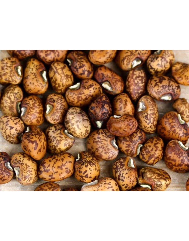 Baker Creek Seeds Cowpea, Old Timer or Purple Hull Speckled