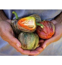 Baker Creek Seeds Pepper, Dieghito Jalapeno