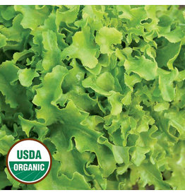 Seed Saver's Exchange Lettuce, Gold Rush
