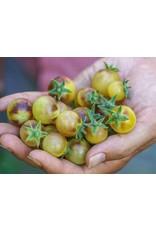 Baker Creek Seeds Tomato, Blue Cream Berries