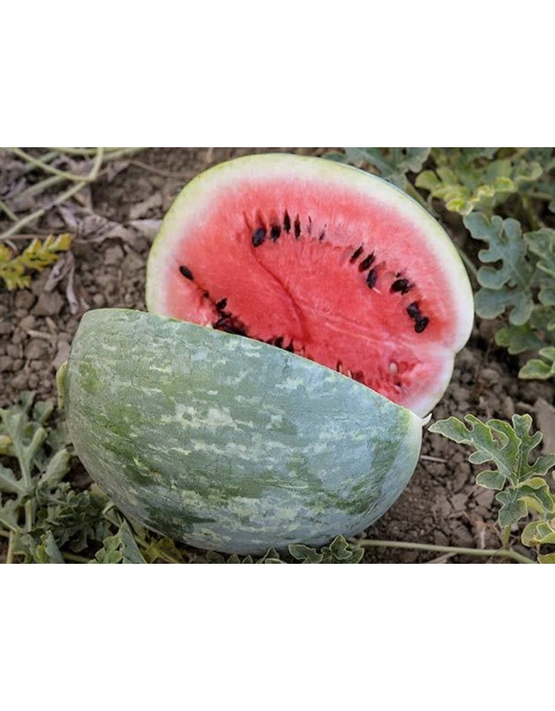 Baker Creek Seeds Watermelon, Scaly Bark
