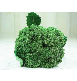 Baker Creek Seeds Broccoli, Waltham 29
