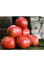 Baker Creek Seeds Tomato, Mortgage Lifter