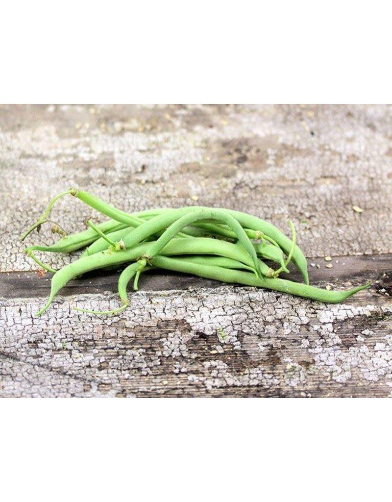 Baker Creek Seeds Bean, Contender (Buff Valentine)