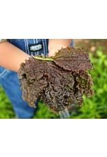 Baker Creek Seeds Plantain, Purple Perversion