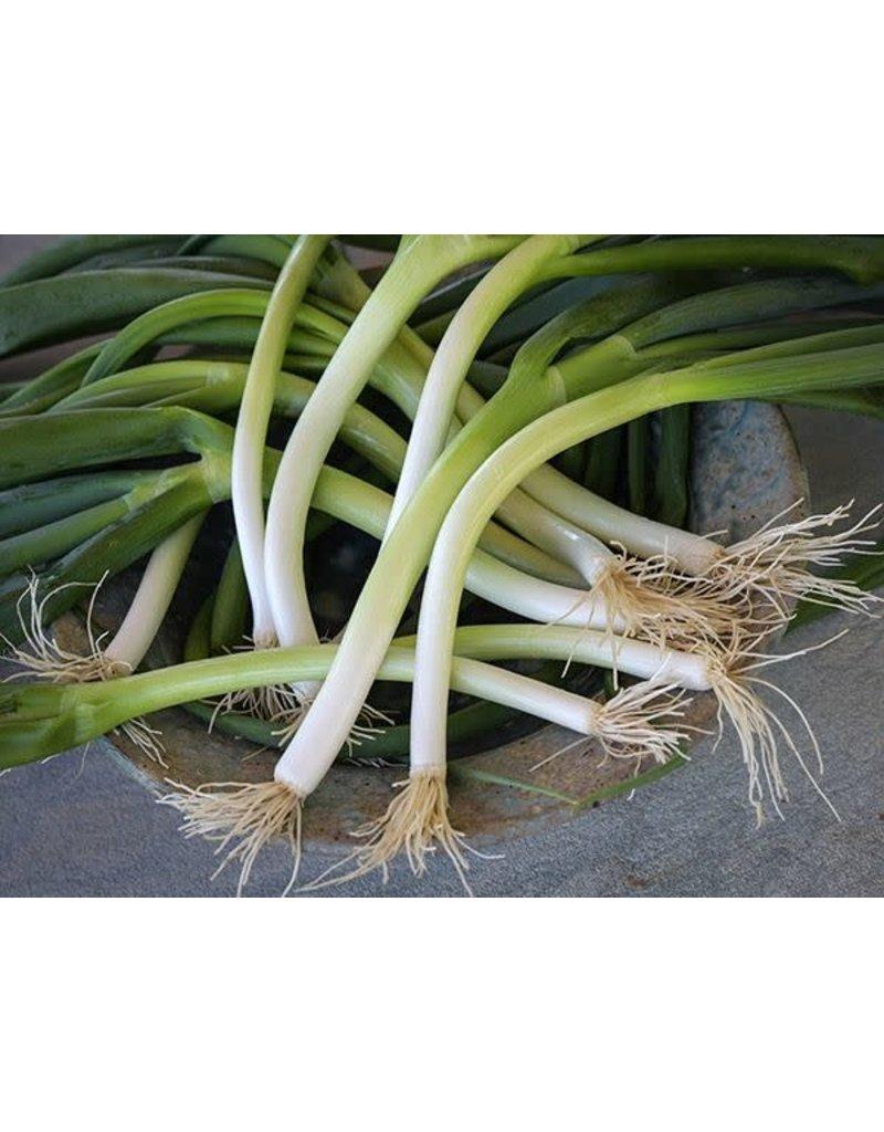 Baker Creek Seeds Onion, Ishikura Bunching
