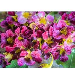 Baker Creek Seeds Nasturtium, Purple Emperor